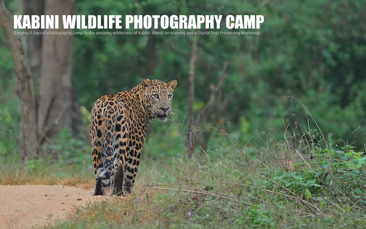 Wildlife Photography camp - Kabini October 2017
