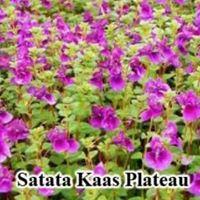 Ride To Satara - Kaas - Mahabaleshwar