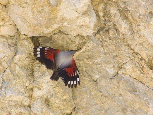 n cutarea fluturailor purpurii