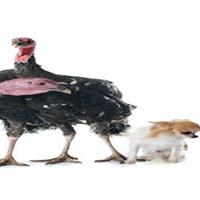 Uniting to Save Animals Wild Turkey Night