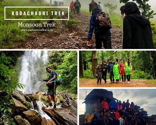 Kodachadri Trek - Jasmine of Hills  Nature Walkers