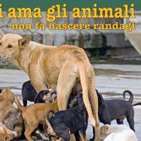 Aiutaci a Sterilizzare I Randagi Del Salernitano