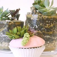Succulent Cake Jars and Planting