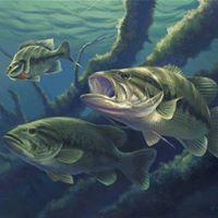 Big green lake open bass tournament at headquarters green for Open bass fishing tournaments