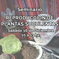 Reproduccin de Plantas Suculentas