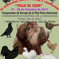Campeonato  De Europa De pita pinta Asturiana Trofeo Villa De Gijon.