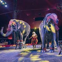 Tarzan Zerbini Circus