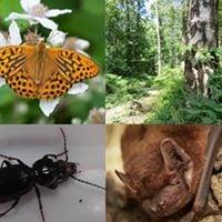 My Wild Life Moths
