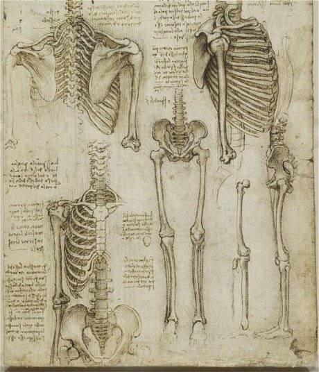 STOTT Pilates Anatomy Review