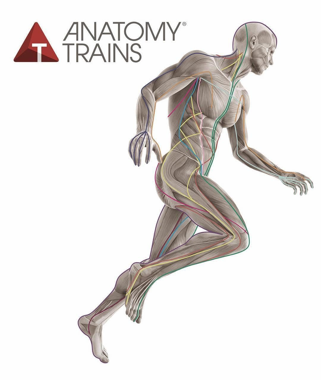 Anatomy Trains Structural Essentials Arches & Legs
