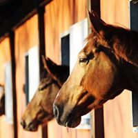 Biosecurity for HORSE FARMS &amp Effective Quarantine Procedures