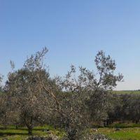Corso di potatura olivi e bagno a Saturnia