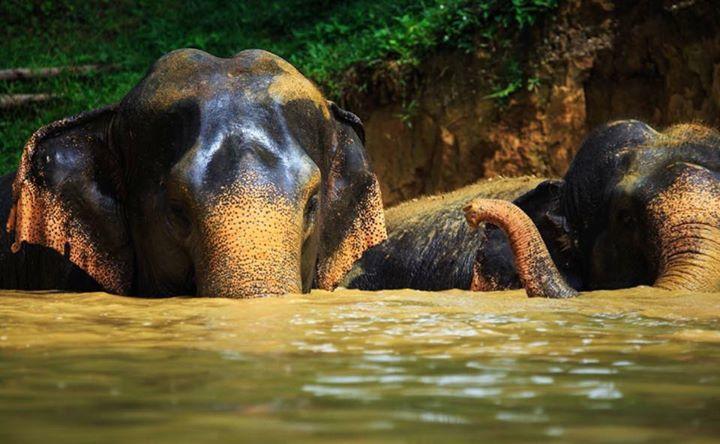 Thailand Adventure 2019
