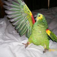 Woodhaven Nursing Center Educational Exotic Bird Presentation