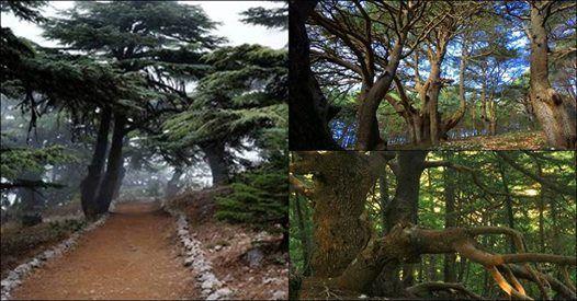 Al-Chouf Cedars Nature Reserve Hike