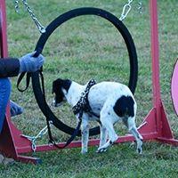 Allenamento Mobility Dog