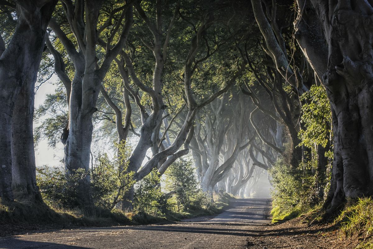 Giants Causeway and Game of Thrones Tour from Belfast with Touring Exhibition (Apr19 - Jul19)