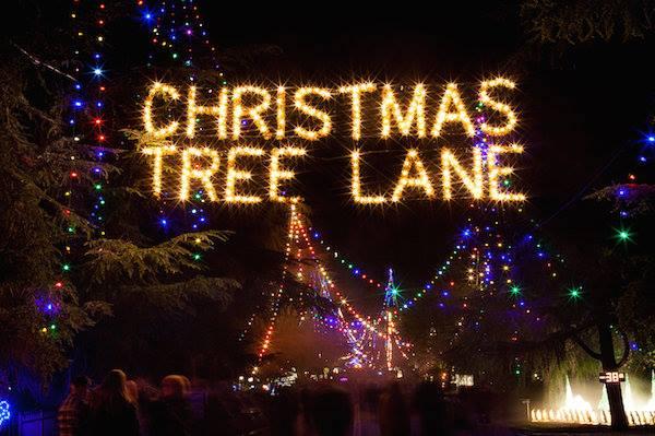 christmas tree lane walk nights 2017 at gazebo gardens nursery fresno - Christmas Tree Lane Modesto Ca