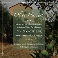 Organic Olive Harvest at Adonis Valley Farmhouse