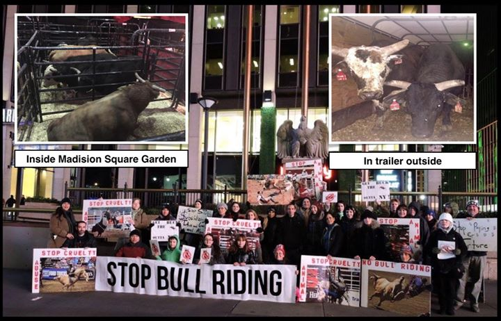 Protest Bull Riding Event In Nyc At Madison Square Garden New York