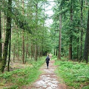 Walk Unplug in the forest of Veenendaal (15KM)