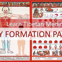 TibMET 3  Body Formation Part 1