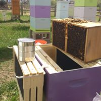 Hive Startup Installing Nucleus Hives &amp Package Bees