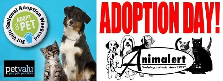 Image result for national adoption weekend petvalu