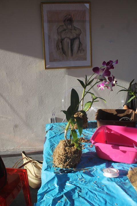 Atelier Kokedama orchides