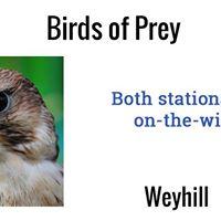 Birds Of Prey Workshop