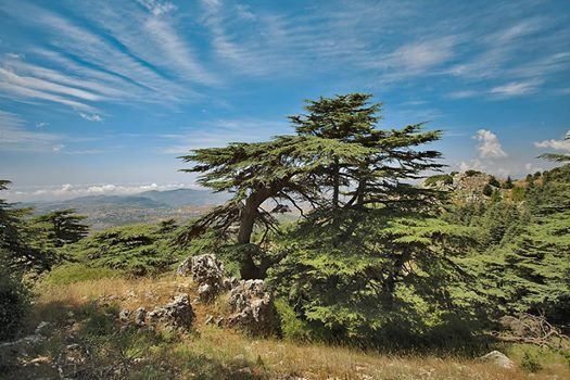 Nature Retreat in Barouk Forest with Shaman Maan Kantar