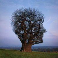 Mindfulness Course