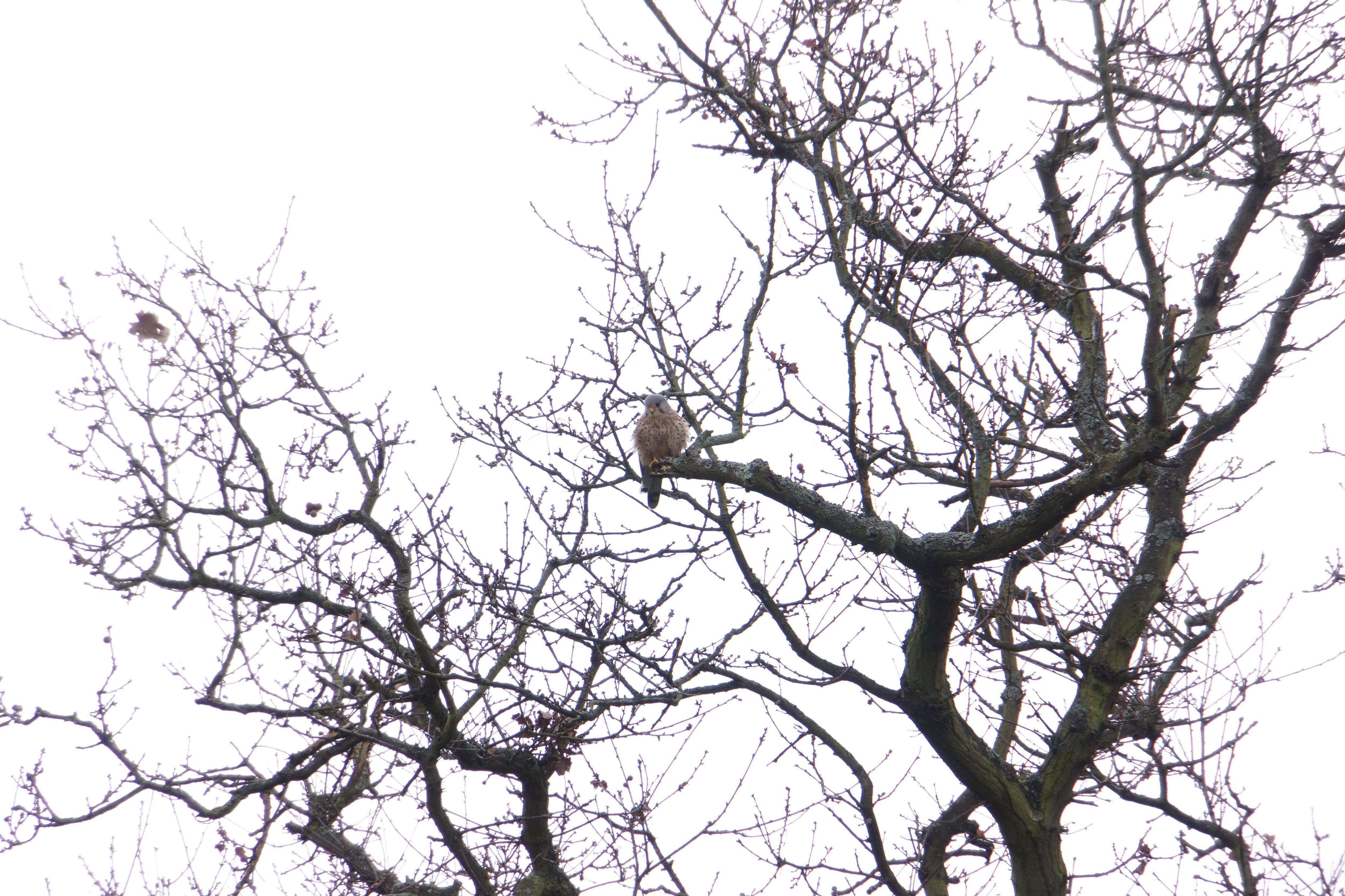 RSPB Big Garden Bird Watch at Kingston Uni - Roehampton Vale
