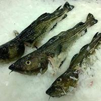 wiee ryby prosto znad morza w Poznaniu  ZIELONY TARG na Rynku Bernardyskim - sobota  Zamawiasz i odbierasz