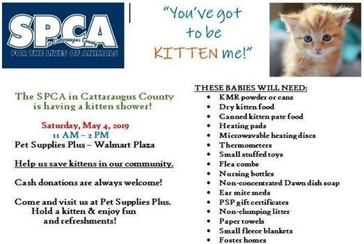 SPCA Kitten Shower at Pet Supplies Plus - Olean, NY, New York