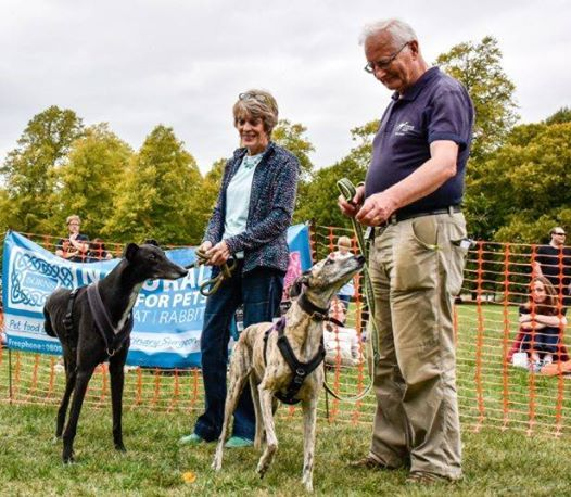 Forever Hounds Trust Somerset Dog Show