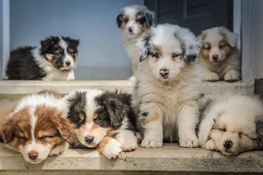 Thursday Puppy Lifeskills Classes - 6 week block - January 2019