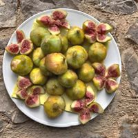 Days of Figs in Krk