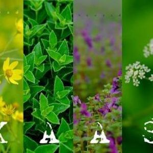 TMI Tour to Maharashtras Valley of Flowers On 22nd-23rd Sep18