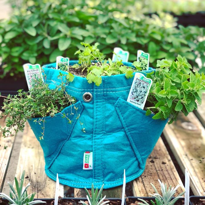 Kitchen Garden in a Bag | Dalton