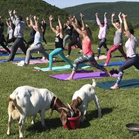 Sunset Yoga on the Homestead (with Goats) - Instructor Barbara Nicholson