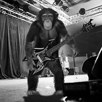 Monkey Party Just Because Version