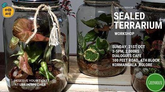 Sealed Terrarium Workshop