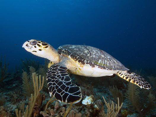 Belize SCUBA Diving Trip