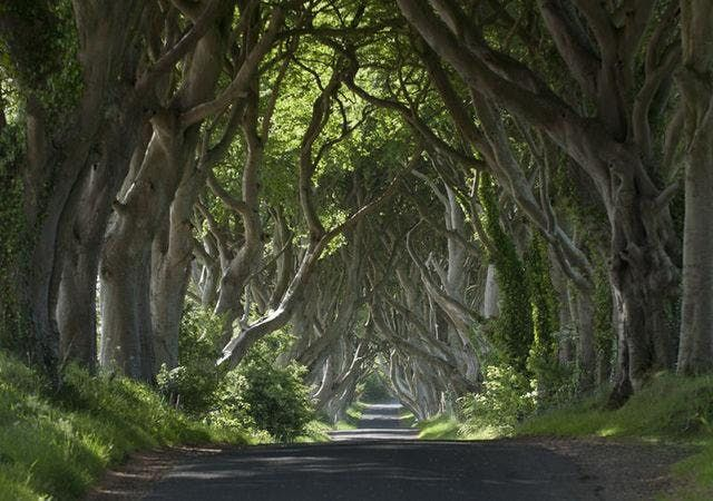 Game of Thrones Tour from Belfast including Giants Causeway Feb19-Apr19