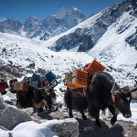 Discover Sikkim