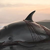 Rally to Save the Vaquita the Worlds Most Endangered Porpoise