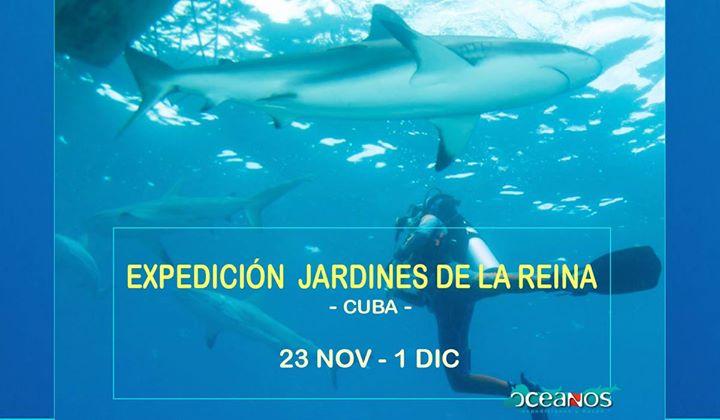 Buceo En Jardines De La Reyna Cuba At Oceanos Expediciones Y Buceo