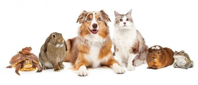 Pet Portrait Day