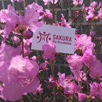 Sakura - die Kirschblüte   Annette Nigl